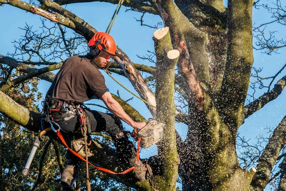 Holzfäller-Kanada-Traumjob-Brennholz-Forst